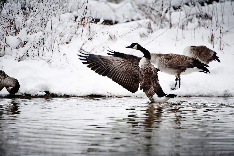 Landschaft und Vögel am Silbersee